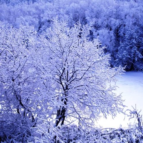 12月の上の小池のイメージになります