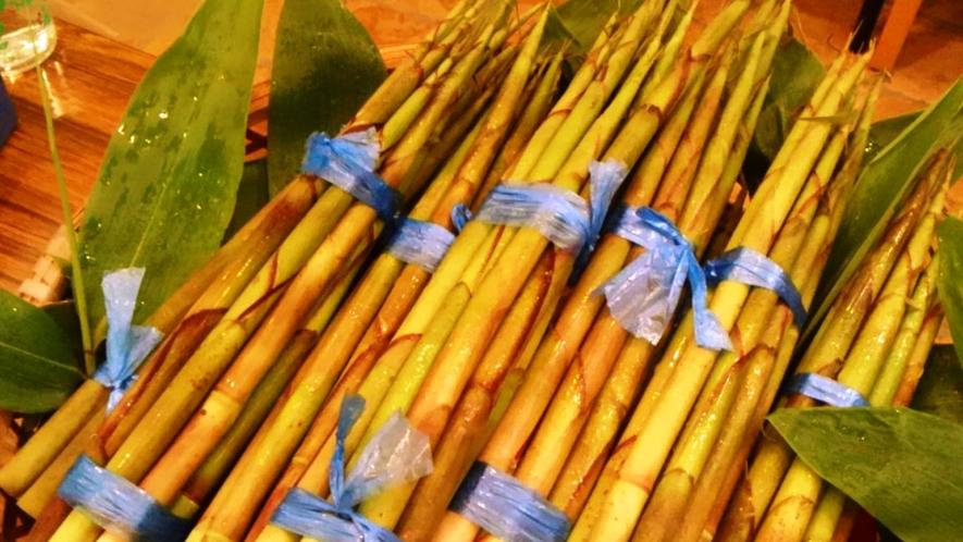 この時期にしかとれない根曲がり竹で旬の料理をお楽しみください/イメージ
