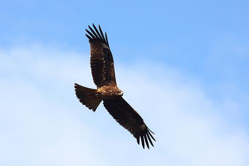 鷹のわたり