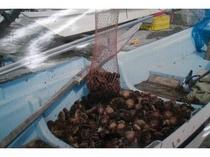 店主が漁師のため、礼文でとれた新鮮な海の幸