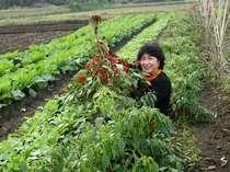 【農園】阿蘇の四季農園では沢山の野菜や米を収穫中