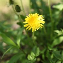 【館内に咲く野の花々】