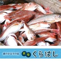 香住港で水揚げされる新鮮な魚介
