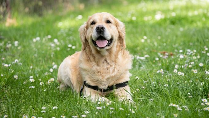 【ペットと泊まれる宿】《夕朝食付き》わんちゃん専用フロアは1室のみ!〜愛犬とお出かけカモ旅〜