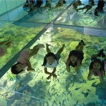 ●松島水族館
