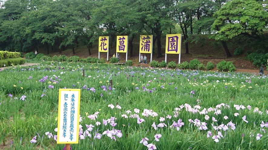 ●花菖蒲園