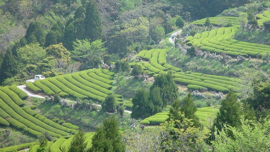 *周辺観光:地下の茶山
