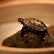 【湯上り処】かわいい亀に癒されます