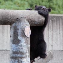 *【熊牧場】当館から車で3分。愛らしい熊の様子に癒されます。