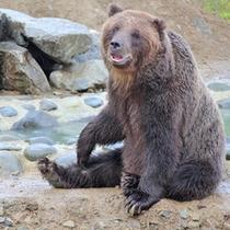 *【熊牧場】園内は性別や大きさに合わせて、5つの区画に分かれています。