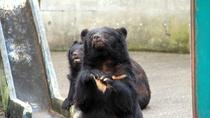【くまくま園】おねだりするクマさんたちにエサやりもできちゃいます♪
