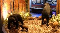 【マタギ資料館】阿仁の山の動物たちの迫力ある剥製も展示。お子様もワクワク!
