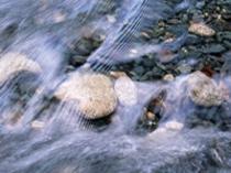 川釣り(イワナ)