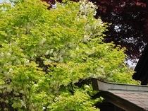 美しい新緑の夏