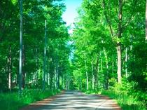 自然が豊かな日和田高原(イメージ)