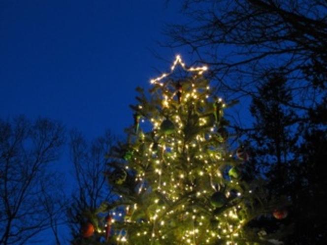 アメリーハウス軽井沢のクリスマスツリー