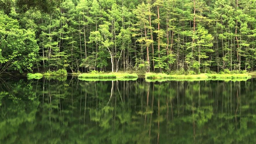 *【周囲の自然】御射鹿池(徒歩10分)