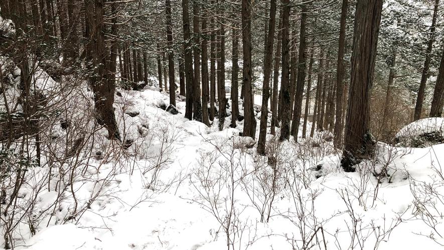 *【周囲の自然】苔の森(徒歩15分)