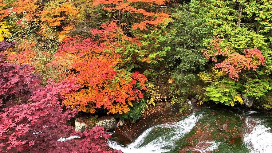 *【周囲の自然】おしどり隠しの滝/紅葉