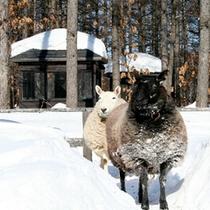 羊の『リリー』と『ローズ』