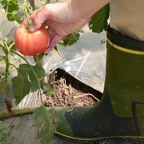 *体験/野菜農場 収穫体験(無料)