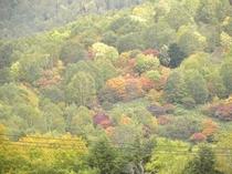 志賀高原の紅葉・・車で60分