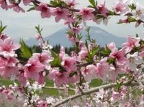 桃畑と残雪の黒姫山