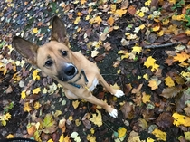 mix犬ルイ君と朝のお散歩