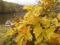 戸隠鏡池の紅葉 秋の戸隠は紅葉と新そば