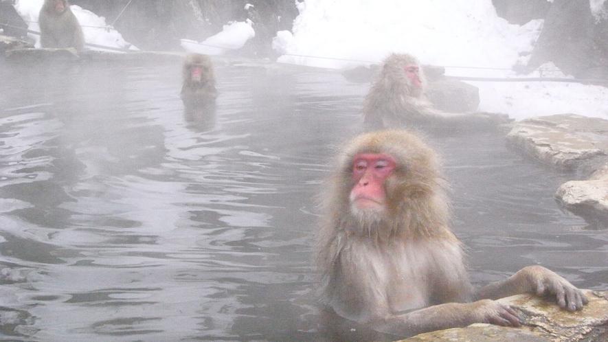「野猿公苑」お猿さんも温泉が大好き
