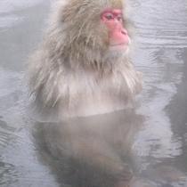 「野猿公苑」大人気のスノーモンキー