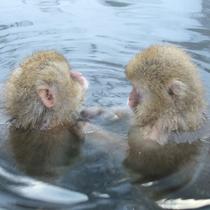 「野猿公苑」可愛らしいお猿さんの入浴