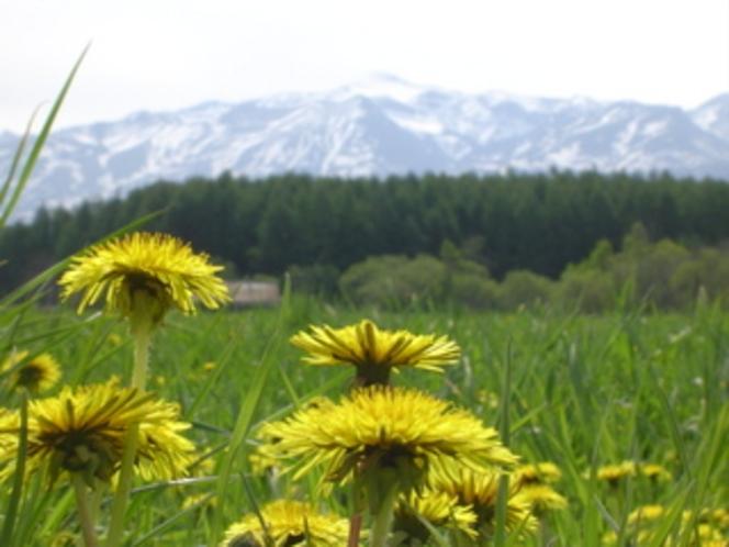 春の十勝岳連峰