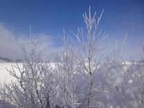 冬の富良野