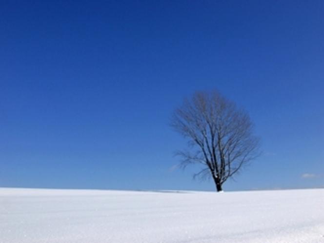 冬の富良野・美瑛