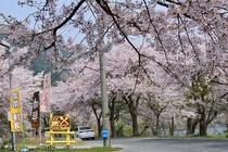 春のペンション「ラダー」前の湖岸道路からの入口②