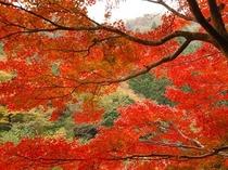 季節:秋の吉奈温泉