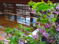 白藤の湯と河津桜