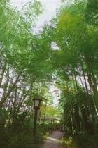 修善寺・竹林の小道