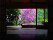 部屋:露天付き特別室春