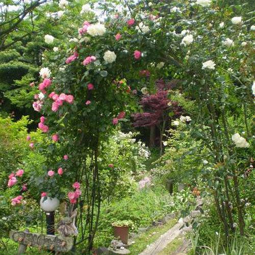 *庭にあるバラのアーチ