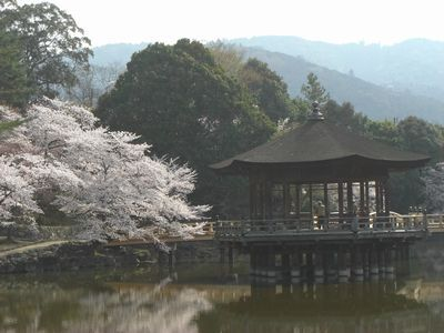 浮見堂の桜