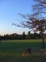 奈良公園・春日野