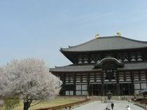 東大寺の桜