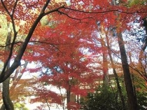 唐招提寺の紅葉