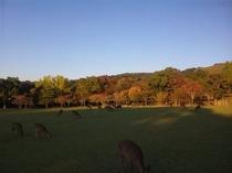 奈良公園・浮雲園地