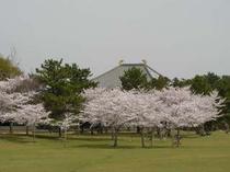 奈良公園・春日野の桜