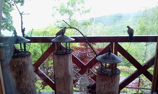 ベランダと小鳥