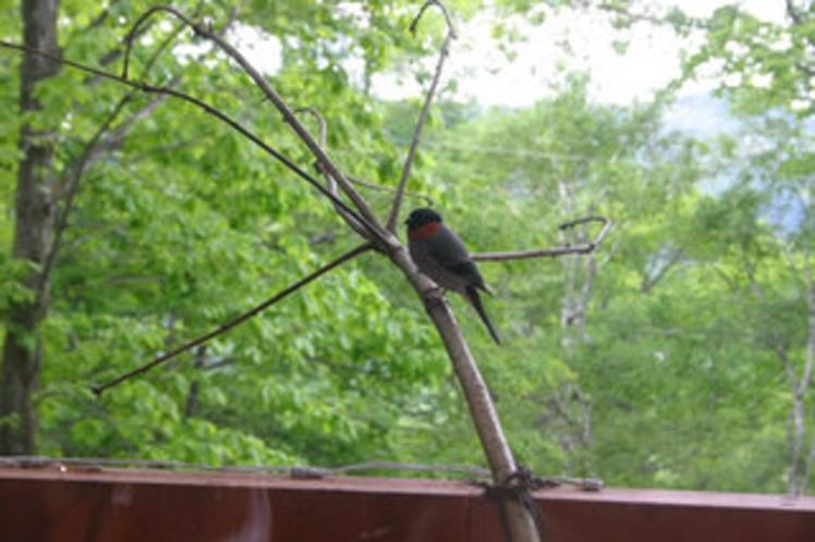 ベランダにやってくる小鳥