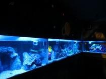 水族館 神秘的な水族館